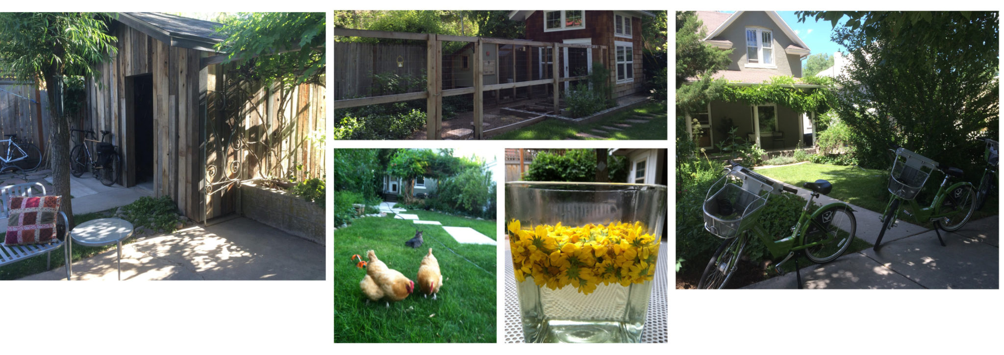 Growing a home,a garden,a  family,a love of biking and chickens in our community.